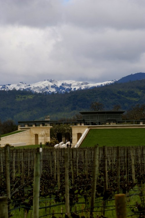 Opus One with snow on Howell Mountain