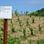The Brilliant Wines of Ridge